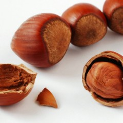 About Hazelnuts
